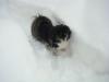 Kara kämpft sich durch den Schnee