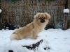 Gesar im Schnee