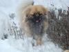 Janosch im Schnee