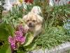 Kukka in den Blumen 2